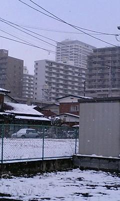 雪だよ〜!