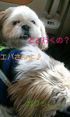 トリミング〜