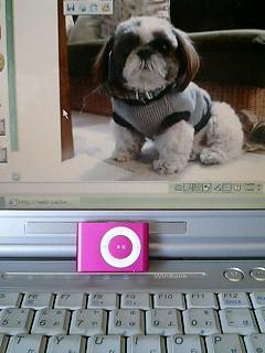 iPodしゃっほ〜