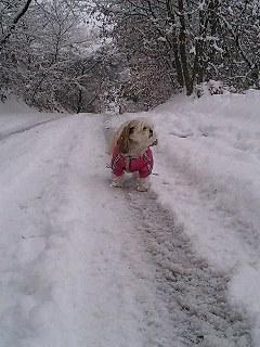 また雪だよ〜