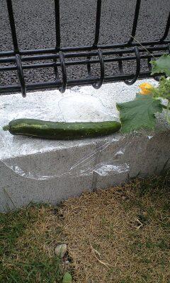 我が家の庭(狭ッ)